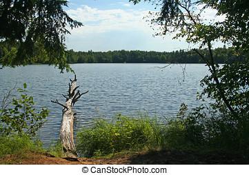 Fallen Tree in Wilderness Lake