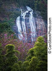 Cor-de-rosa, flor, Cachoeira