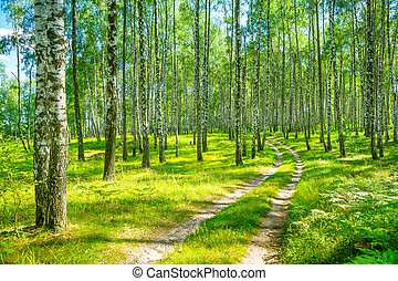 in birch forest
