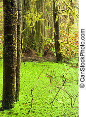 Rainforest wetland wildernis of West Coast BC - Temperate...