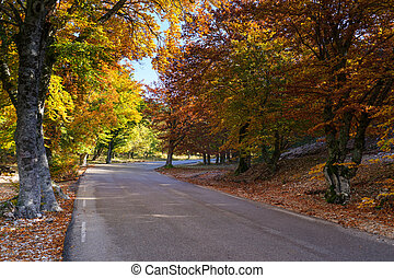 Indian Summer at the Mt Ventoux, Vaucluse, Povence, France