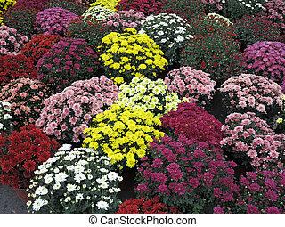 colorido, jardín, flores, Macetas