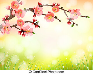 Sakura, cherry blossom in morning light, pattern background