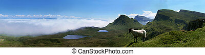 Quiraing lamb - A little lamb above the clouds in Quirang,...