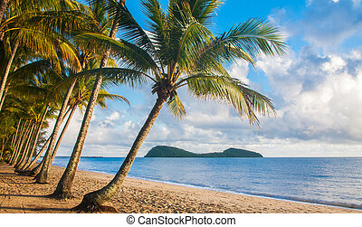 Tropical beach with palm trees - A beautiful tropical beach...
