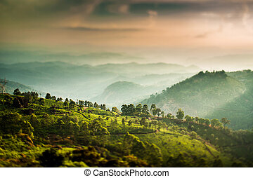Tea plantations in India tilt shift lens - Landscape of the...