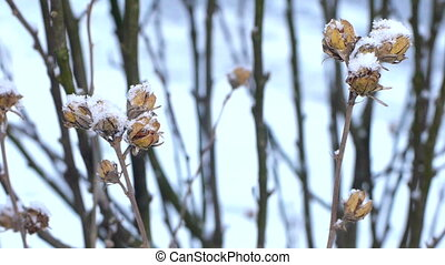 Dried flower in the snow