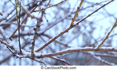 Tree branch in a snowy day