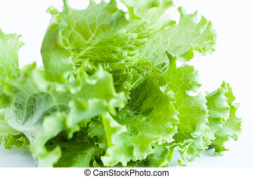 green salad on a white background - Lollo Rosso, food