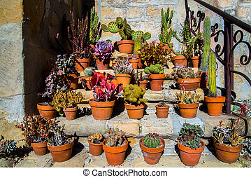 succulents at california mission