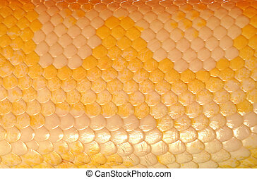 Snake skin, with its highly periodic cross-hatch or grid...