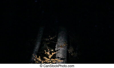 Dark forest lightened by flashlight
