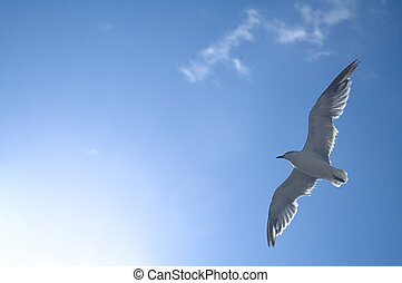 sea-gull - white sea gull flying above, blue sky, hot sun