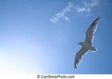 sea-gull - white sea gull flying above, blue sky, hot sun