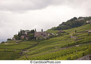 Houses amidst vineyards against an overcast sky