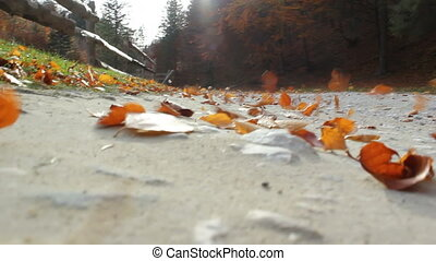 Autumn leaves blown away by wind