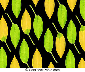 Hosta Leaf Design