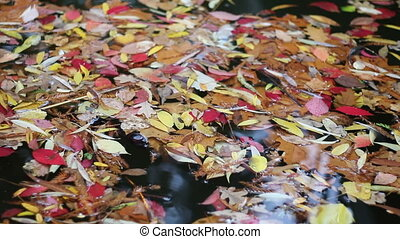 Colored leaves floating on water