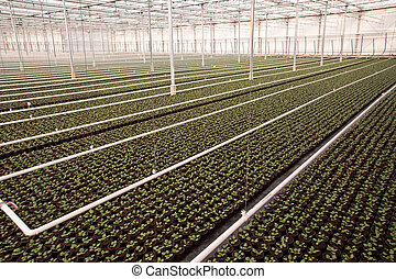 Nursery Hothouse - Crops are Growing in a Nursery Greenhouse...