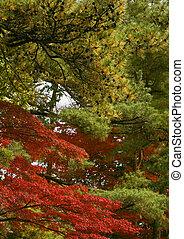 Combination of autumn colors