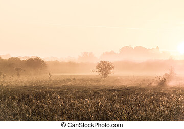 fog - a foggy landscape on a october morning