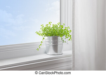 verde, planta, moderno, hogar