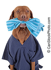 I can help you cleaning - portrait of a dog wearing uniform...