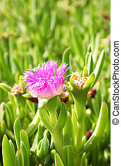 A succulent flower with green grass background