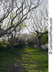 tree lined path - a tree lined grass path in the county...