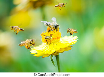 Group of bees on a flower - Close up group of bees on a...