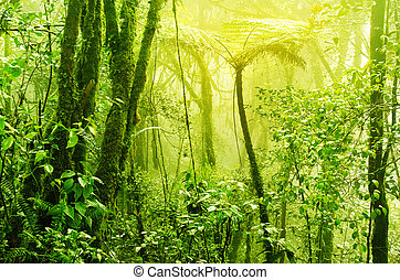 Misty tropical green mossy rainforest