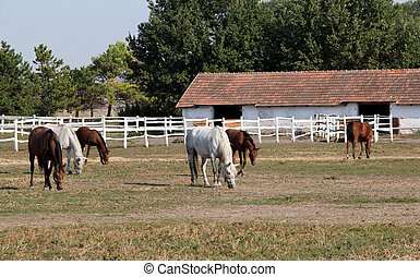 farm with herd of horses in corral