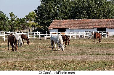 ferme, troupeau, chevaux, corral