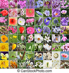 Spring flower collage with color arrangement