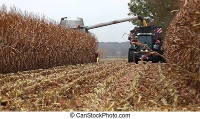 Thresher harvesting maize for silag - A harvester empties...