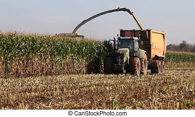 Harvesting the maize crop for silage with an agricultural...
