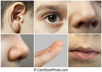 Set of the human senses. Child face partes