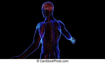 Nervous system - All human body systems. Transition body -...