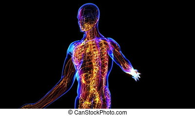Lymphatic System - All human body systems. Lymphatic system...