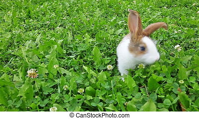 rabbit on a green lawn