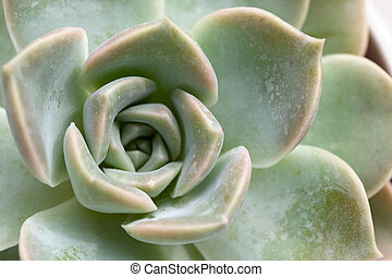 Macro of the Succulent plant - Macro of the Succulent...