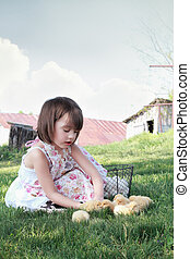 Child Playing with Chicks - Little girl watching young...