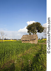 Punjabi straw hut - a straw hut in the with tree wheat and...