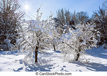 Winter landscape with two trees covered by hard snow and...