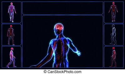 Nervous system - Human nervous system