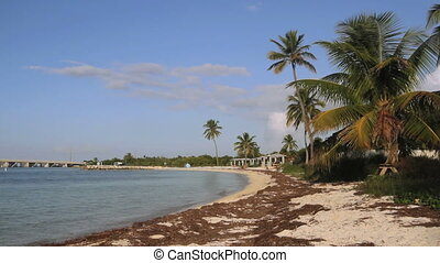 Beautiful Beach - A sandy beach with palm trees at Bahia...