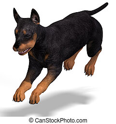 cute puppy doberman