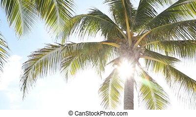 Sunny palm tree.