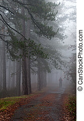 Forest with fog and man walking - One man walking in a...