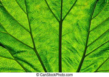 Foliate - Texture of the green leaf from a short distance